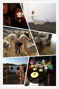 Alpaca Adventure La Rosilla
