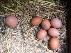The daily eggs at La Rosilla